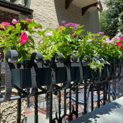 Decorative wrought iron railing planter, painted black, at private residence in New York City (Item 93-0-03)